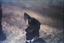 guilty-dog-dachshund